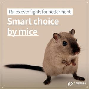 Rules over fights for betterment - Smart choice by mice