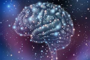 뇌 속 별세포가 촉감의 민감도를 조절한다