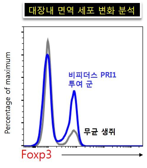 비피더스 PRI1균을 무균생쥐에 투여하자 대장에서 면역 조절 T세포인 Foxp3가 두 배 이상 증가했다.