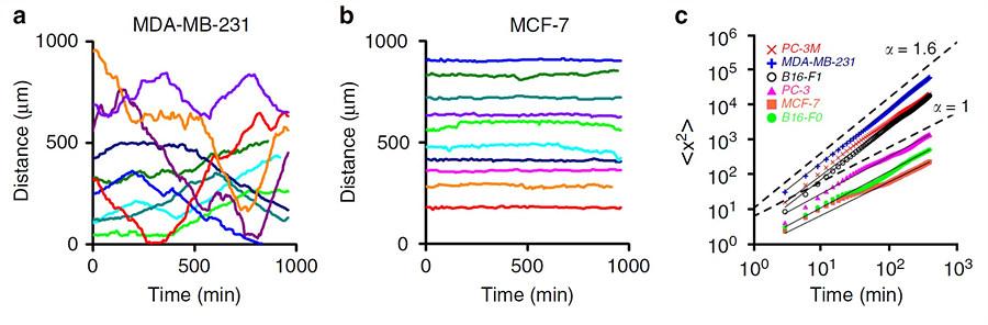 유방 전이암세포 MDA-MB-231의 시간에 따른 위치를 나타낸 그래프(a)를 보면 일정 시간 동안은 위치 변화가 거의 없다가 또 어느 시간대엔 큰 위치 변화를 만드는 패턴을 볼 수 있다. 반면 유방암의 비전이 암세포 MCF-7는 오랜 시간 매우 미세한 위치 변화만을 보였다(그래프 b).