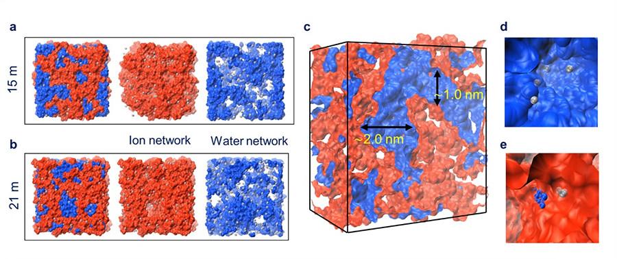 물 기반 전해질의 내부 구조 시뮬레이션 결과. 물 분자(파란색)와 염(붉은색)이 서로 섞이지 않는 '이온 네트워크 구조'를 형성하고 있음을 확인할 수 있다.