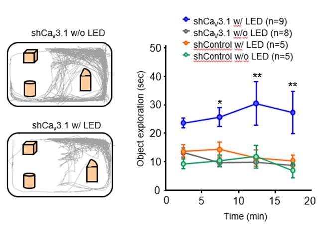 연구진은 사회성 뇌과학 그룹과 공동 연구를 통해 LED 빛을 비추자 광활성 Flp 단백질의 발현이 활성화되면서 유전자 조절이 이뤄졌고, 이후 실체 물체 탐색 능력이 증가하는 행동까지 관찰하는데 성공했다.