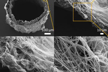 Bioengineered hybrid muscle fiber for regenerative medicine