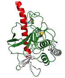 진화의 아름다움: 드로셔 단백질의 구조
