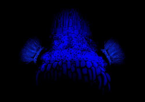 Blue Dokkaebi