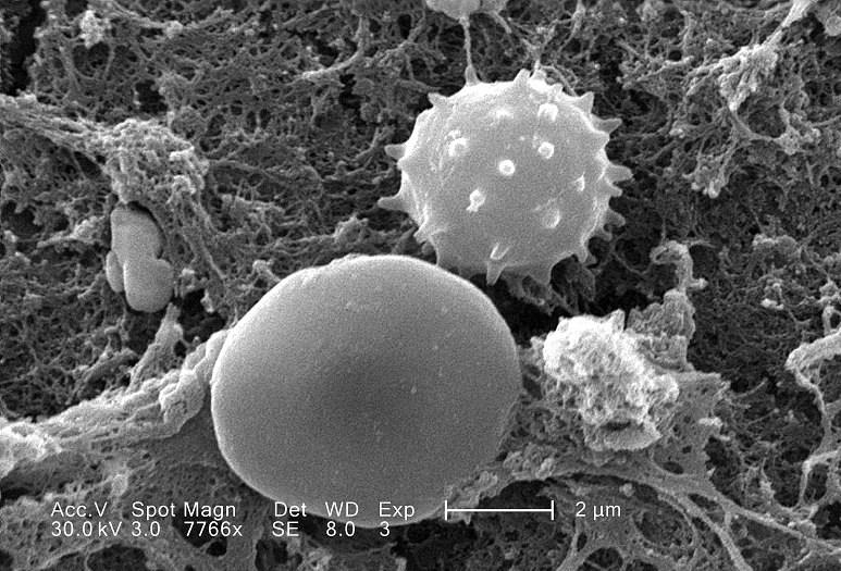 생명체의 기본단위인 세포 속에서 일어나는 활동의 나노 수준에서 정밀하게 조절되는 현상이다.