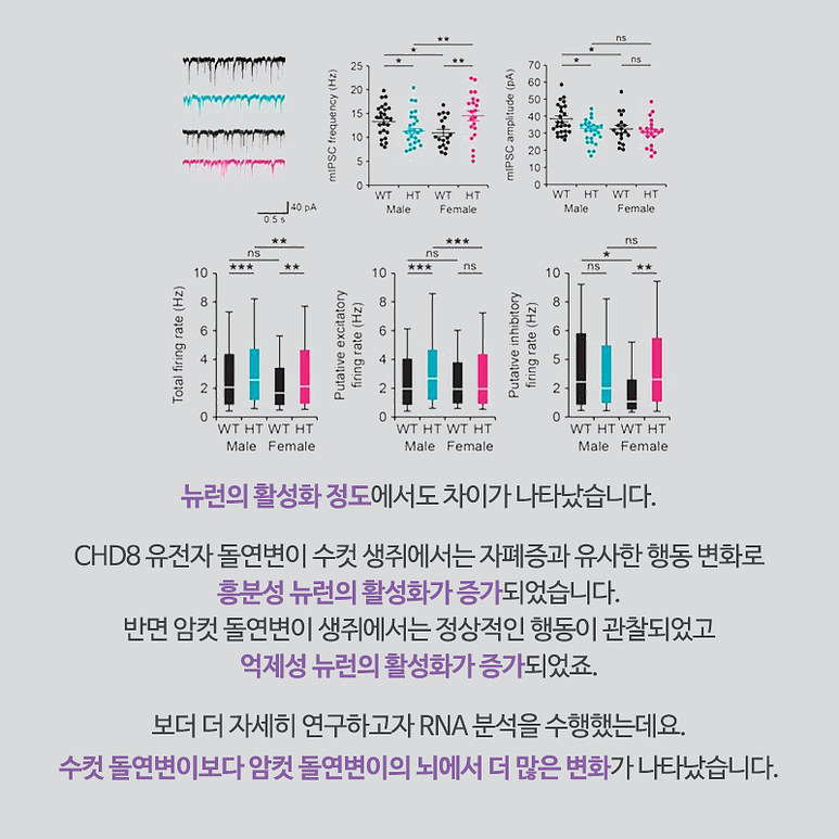 뉴런의 활성화 정도에서도 차이가 나타났습니다. CHD8 유전자 돌연변이 수컷 생쥐에서는 자폐증과 유사한 행동 변화로 흥분성 뉴런이 활성화가 증가되었습니다. 반면 암컷 돌연변이 생쥐에서는 정상적인 행동이 관찰되었고, 억제성 뉴런의 활성화가 증가되었죠. 보다 더 자세히 연구하고자 RNA 분석을 수행했는데요. 수컷 돌연변이보다 암컷 돌연변이의 뇌에서 더 많은 변화가 나타났습니다.