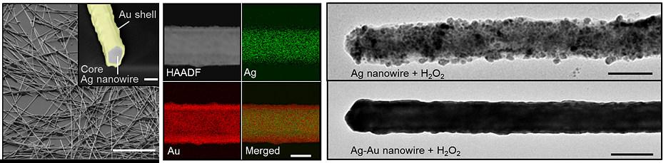 은나노와이어의 표면에 금을 입힐 경우, 산화반응이 일어나지 않는다. 강력한 산화제(H2O2)를 처리한 결과, 은나노와이어는 산화되었지만(그림 가장 오른쪽 위) 금을 입힌 은나노와이어(그림 가장 오른쪽 아래)는 산화되지 않았음을 확인할 수 있다. (사진 : 기초과학연구원)