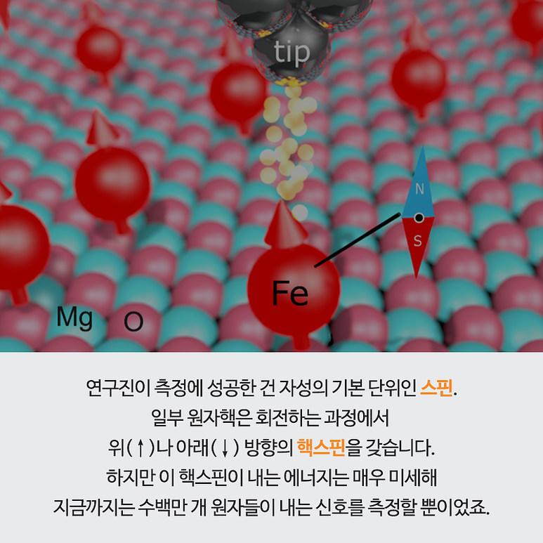 연구진이 측정에 성공한 자성의 기본 단위인 스핀. 일부 원자핵은 회전하는 과정에서 위(↑)나 아래(↓) 방향의 핵스핀을 갖습니다. 하지만 이 핵스핀이 내는 에너지는 매우 미세해 지금까지는 수백만 개 원자들이 내는 신호를 측정할 뿐이었죠.