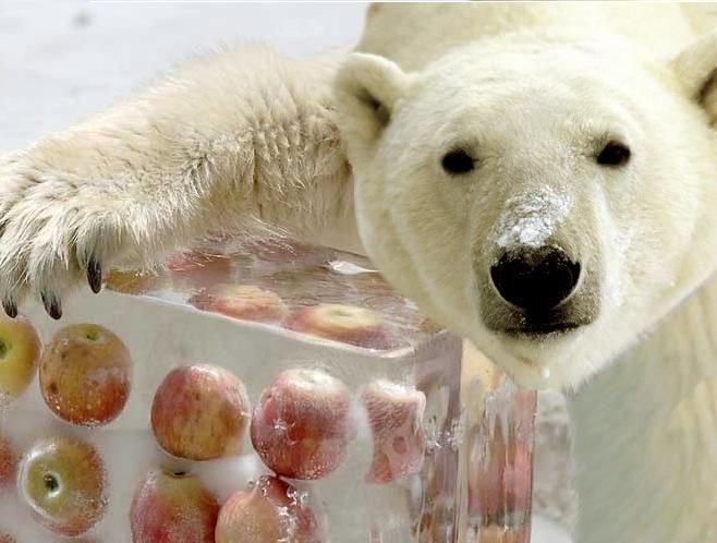 너도 나도 아직 갈 길이 멀다곰! (출처: the alaska zoo)
