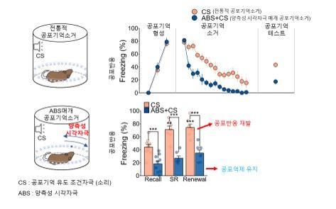양측성 시각자극을 사용한 공포기억 반응-감소 효과 (출처: IBS))