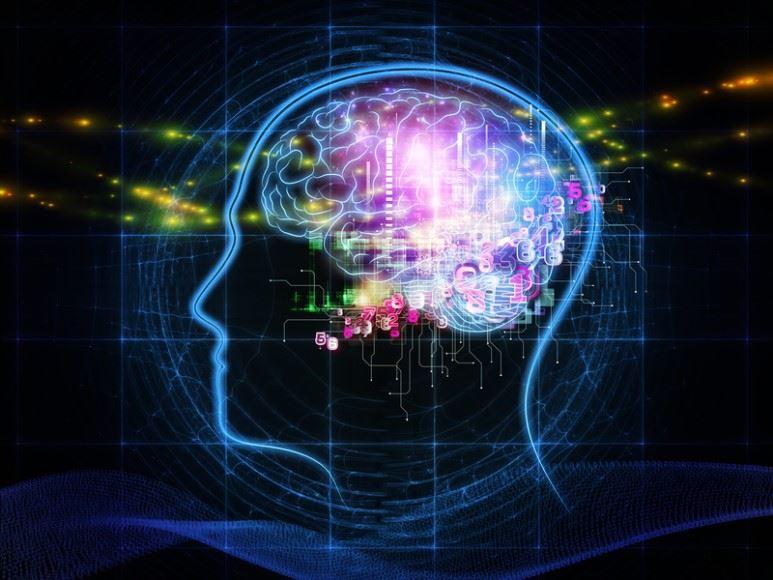 뇌는 인체에서 정신활동을 담당하는 유일한 기관이다. (출처: Flickr)