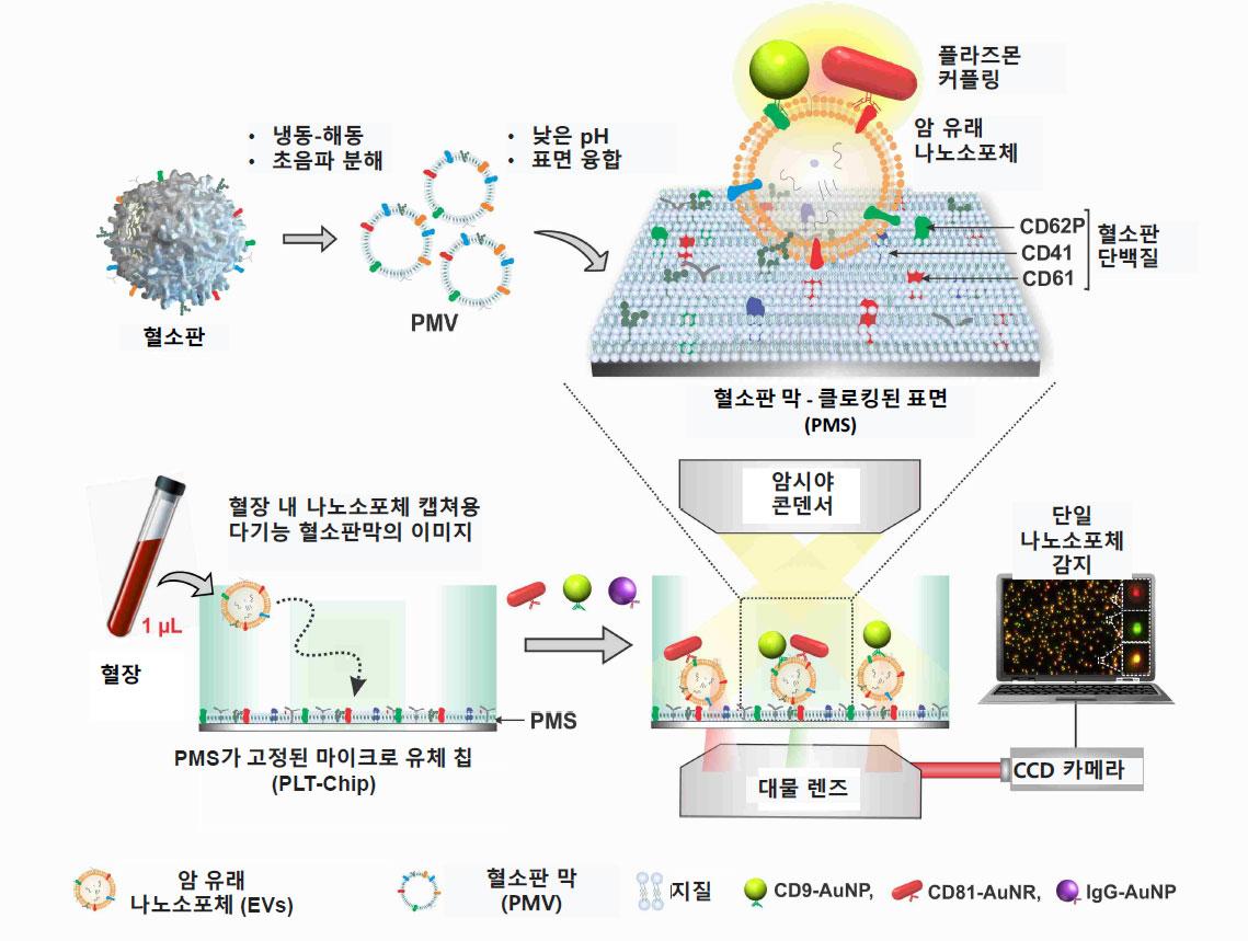 그림 1. 나노소포체 검출 및 시각화 실험 개략도