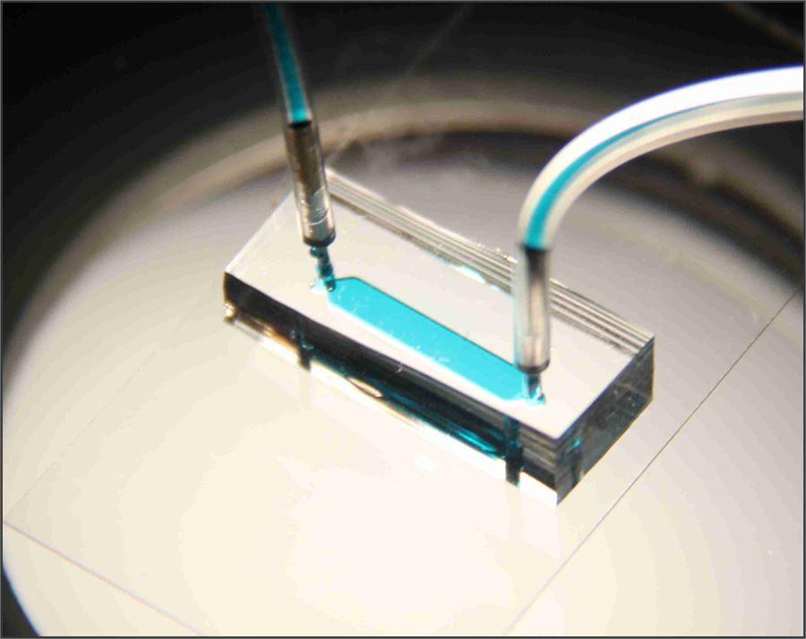 실험에 사용된 혈소판 칩.