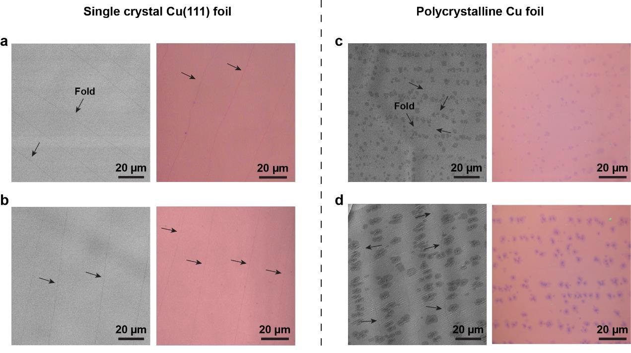 연구진은 탄소 불순물을 제거한 다결정 구리 호일 위에서 다결정 그래핀을, 단결정 구리 호일 위에서 단결정 그래핀을 성장시켰다. 위 이미지는 주사전자현미경(SEM)으로 관찰한 단결정 그래핀(왼쪽)과 다결정(오른쪽) 그래핀의 모습이다.