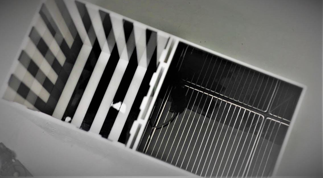 실험쥐는 줄무늬 방과 검은 방을 자유롭게 오고갈 수 있으며, 선호하는 방에 좀 더 오래 머무는 편이다.