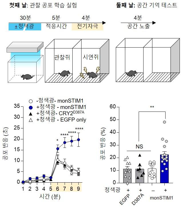 빛 자극으로 뇌신경세포 내 칼슘 농도 조절 및 공간 공포 행동 실험