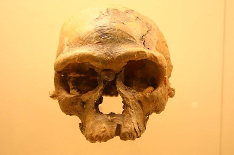 <아프리카 북부 모로코에서 발굴된 '제벨 이르후드-1' 두개골 화석의 연대는 2017년 약 29만 년 전으로 밝혀졌다. 다른 유적 및 유골 화석 연구 결과를 종합하면, 약 30만~31만 년 전에 살았던 것으로 추정된다. 호모 사피엔스의 특성을 갖춘 초기 현생인류로 분류되면서 현생인류 기원 시점과 장소에 의문을 던졌다./스미소니언박물관>