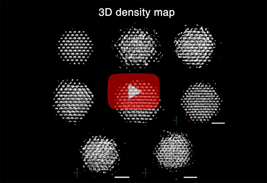 Movie 1. 3D Reconstructions of Individual Nanoparticles. 3D density maps, atomic position maps, and strain maps of 8 reconstructed nanocrystals show critical differences between the individual particles.