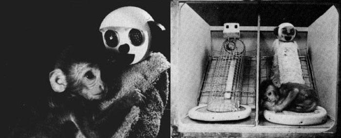 해리 할로우의 가짜 원숭이 실험. 새끼 원숭이는 철사 엄마(왼쪽)와 헝겊 엄마(오른쪽) 중 포근한 품을 가진 헝겊 엄마에게 더 애착을 보였다. [출처: Wikipedia]