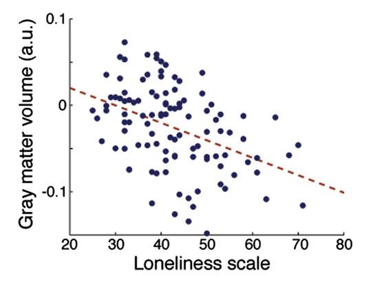 외로움을 자각하는 정도가 클수록 대뇌의 표면인 회색질(gray matter)의 부피가 작아지는 경향이 있는 것으로 나타났다. [Kanai et al., 2012]