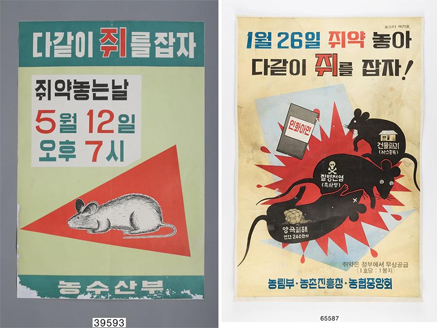 1960~70년대 정부는 일 년에 한두 번을 '쥐 잡는 날'을 정하고, 쥐 박멸에 나섰다. 학교에서는 쥐 잡는 날 포스터 그리기 대회 및 웅변대회를 개최하기도 했다. (출처: 공공누리)
