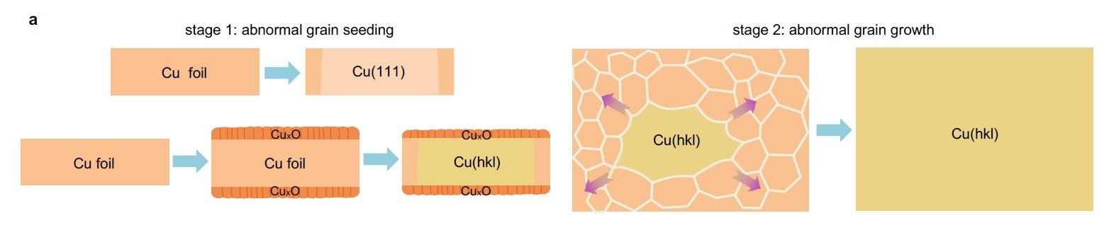 연구진은 다결정 구리 포일을 산화 시킨 뒤, 어닐링 과정을 거쳐 단결정 구리 박막을 제조했다(stage 1). 이후 단결정 구리를 원하는 패턴을 갖는 단면으로 절단해 구리 파편(시드)을 얻은 뒤 다결정 구리 박막에 부착했다. 구리의 녹는점에 가까운 고온에서 수 시간 동안 어닐링을 거치면, 파편 근처의 결정들이 재배열하며 구리 파편과 동일한 패턴을 갖는 대면적 단결정이 제조된다(stage 2).
