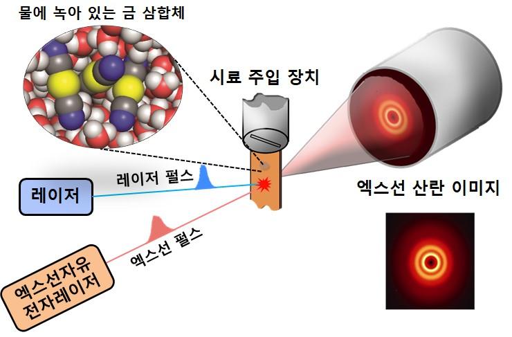 실험 과정의 모식도. 수용액상의 금 삼합체에 레이저 펄스를 가하면 화학결합이 시작된다. 이때 엑스선 자유전자레이저를 통해 얻어진 엑스선 산란 이미지를 분석하면 분자의 실시간 위치와 운동을 파악할 수 있다.
