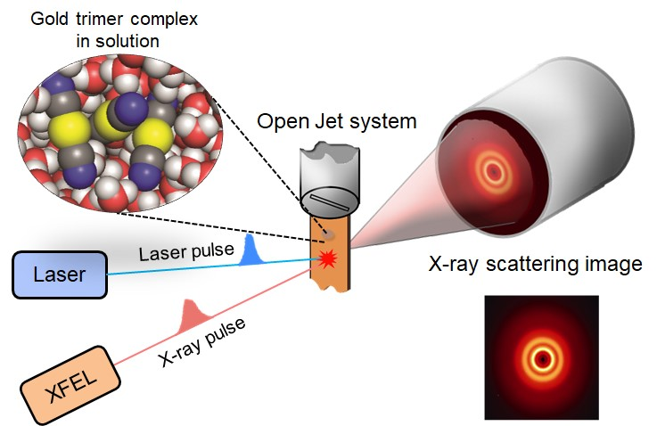 Figure 1 A schematic of the femtosecond x-ray scattering technique. The bond formation reaction in a gold trimer complex is initiated by a laser pulse, and a three-dimensional structure after a certain time delay is detected by an x-ray scattering image. (Credit: IBS)