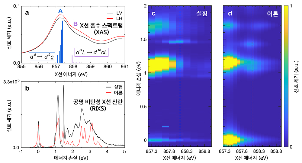 공명 비탄성 X선 산란 실험(왼쪽)과 이론적인 다체 계산을 비교한 그래프(오른쪽)
