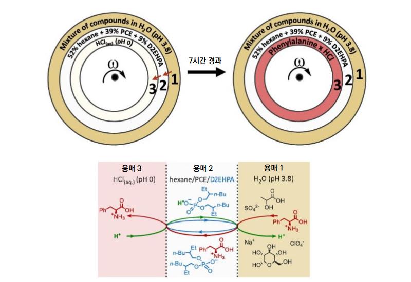 필수아미노산 중 하나인 페닐알라닌을 혼합 용매 1번으로부터 3번으로 추출했다.