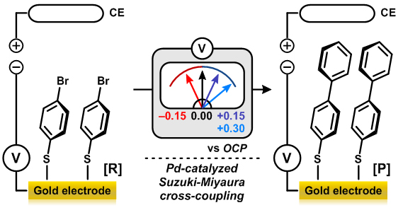 Figure 2-2. Pd-catalyzed Suzuki-Miyaura cross-coupling reaction