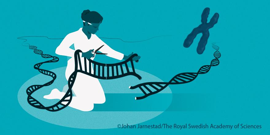 """▲ 2020년 노벨화학상은 유전자 기술의 가장 예리한 도구를 발견한 두 명의 연구자에게 돌아갔다. 노벨상위원회는 """"크리스퍼 유전자 가위를 통해 동물과 식물, 미생물의 DNA를 정교하게 바꿀 수 있게 되는 등 생명과학 기술의 혁명을 야기했다""""고 평가했다. (출처: 노벨상위원회)"""