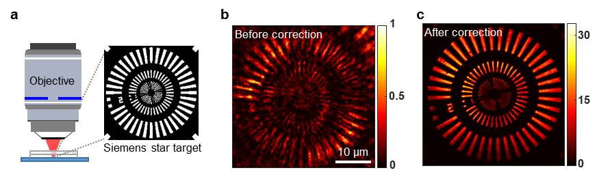 [Figure 2] Comparison test between traditional optical coherence microscopy vs new reflection matrix microscopy