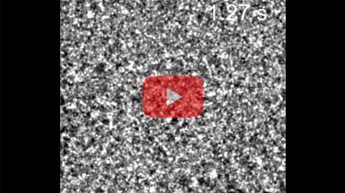 Video 1. The TEM video of gold nanocrystal formation. The video has a temporal resolution of 10 ms and is slowed down by 2x (from 100 frames per second to 50 frames per second). The scale bar denotes 1 nm. The gold atoms repeatedly undergo reversible transitions between disordered state and crystalline state early on during the crystallization process, before becoming stabilized as the crystal grows larger.