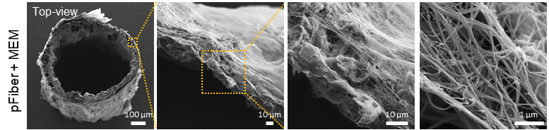 Figure 2. SEM image of the porous PCL scaffold with MEM