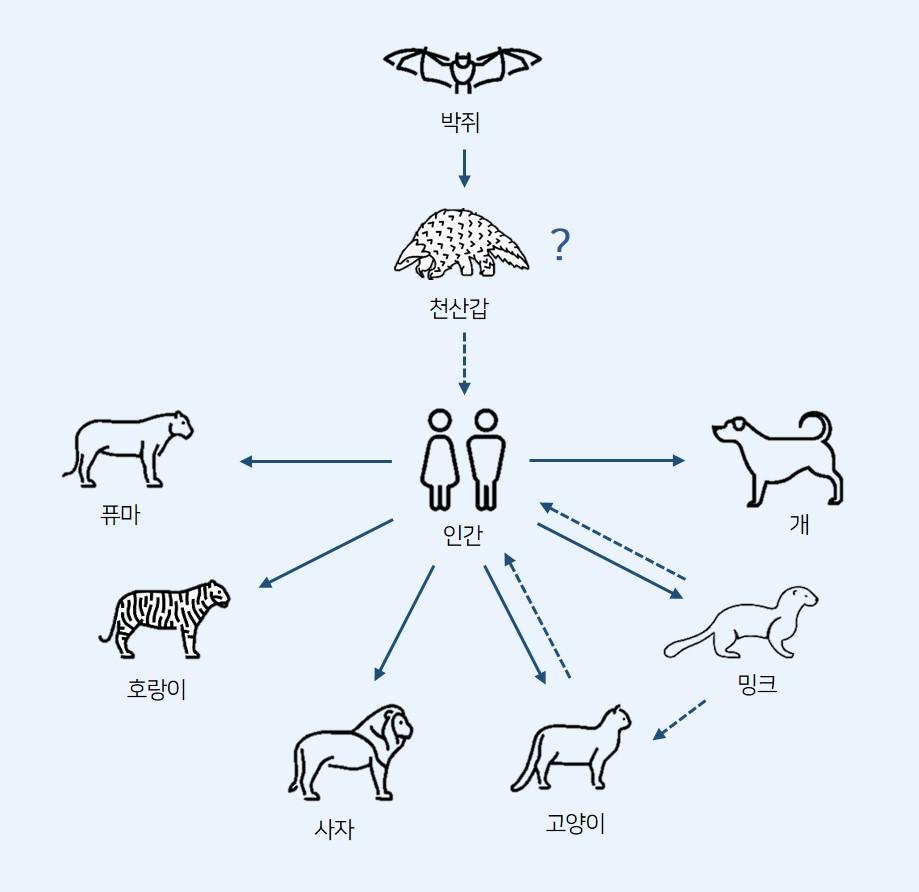 사스코로나바이러스-2는 박쥐로부터 중간숙주로 알려진 천산갑을 거쳐 사람에게 그리고 사람으로부터 주변 동물들에게 확산되고 있다. 현재까지 감염이 확인된 동물들은 총 6종이다. [Sreenivasan et al., 2020]