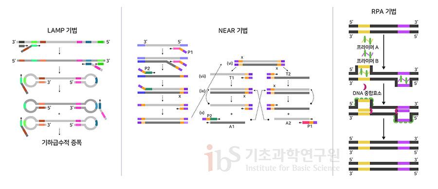 등온증폭법의 세 가지 사례. 등옹증폭법은 특수하게 설계된 DNA 프로브를 사용하여 일정한 온도에서 형광신호를 증폭시키는 방법이다. 형광신호를 토대로 코로나19 감염 여부를 파악할 수 있다.