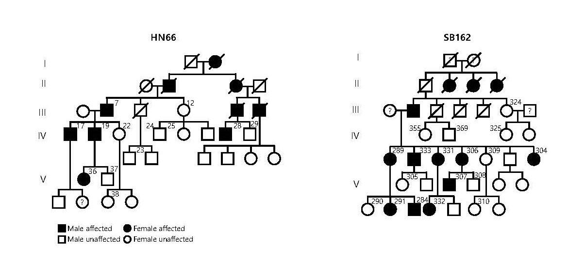 [그림1]  TMEM43 p.Arg372Ter 유전병을 보여주는 가계도