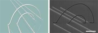 박장웅 IBS 나노의학 연구단 연구위원 팀은 지난 해 6월 3D 프린팅을 통해 전극을 신축성 있게 만드는 방법을 개발했다.