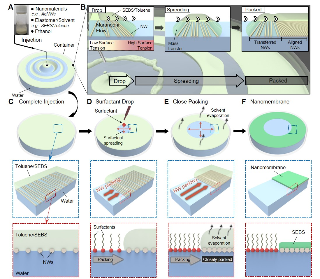 Figure 1. Fabrication of a highly conductive and stretchable nanomembrane using a float assembly method.
