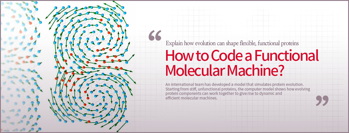 Explain how evolution can shape flexible, functional proteins How to Code a Functional Molecular Machine? An international team has developed a model that simulates protein evolution.  Starting from stiff, unfunctional proteins, the computer model shows how evolving protein components can work together to give rise to dynamic and efficient molecular machines.